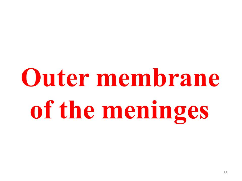 83 Outer membrane of the meninges