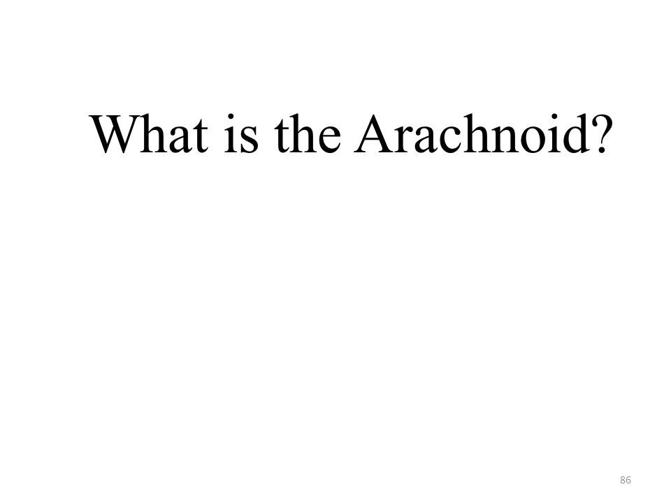86 What is the Arachnoid?