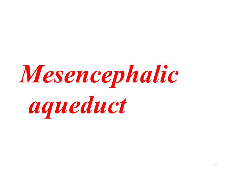 99 Mesencephalic aqueduct