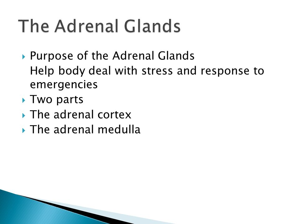  Purpose of the Adrenal Glands Help body deal with stress and response to emergencies  Two parts  The adrenal cortex  The adrenal medulla