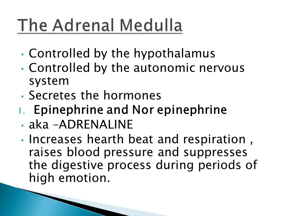 Controlled by the hypothalamus Controlled by the autonomic nervous system Secretes the hormones 1.