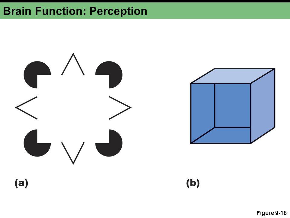 Brain Function: Perception Figure 9-18