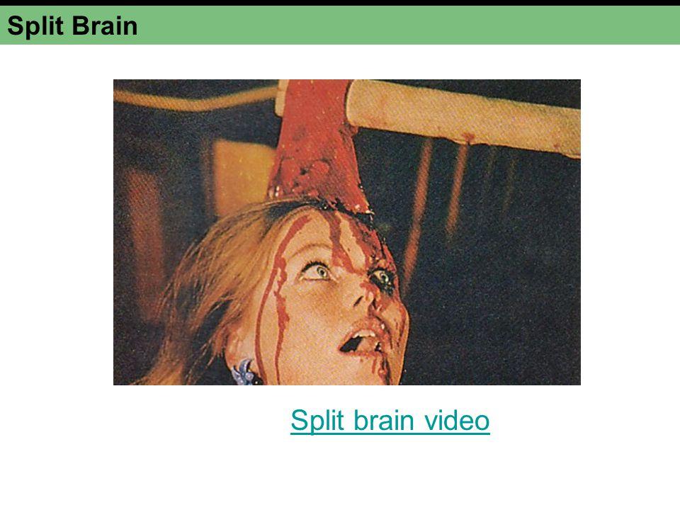 Split Brain Split brain video
