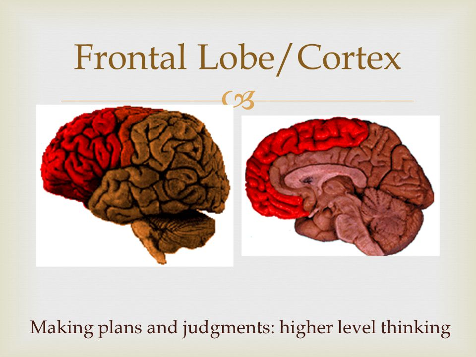  Frontal Lobe/Cortex Making plans and judgments: higher level thinking