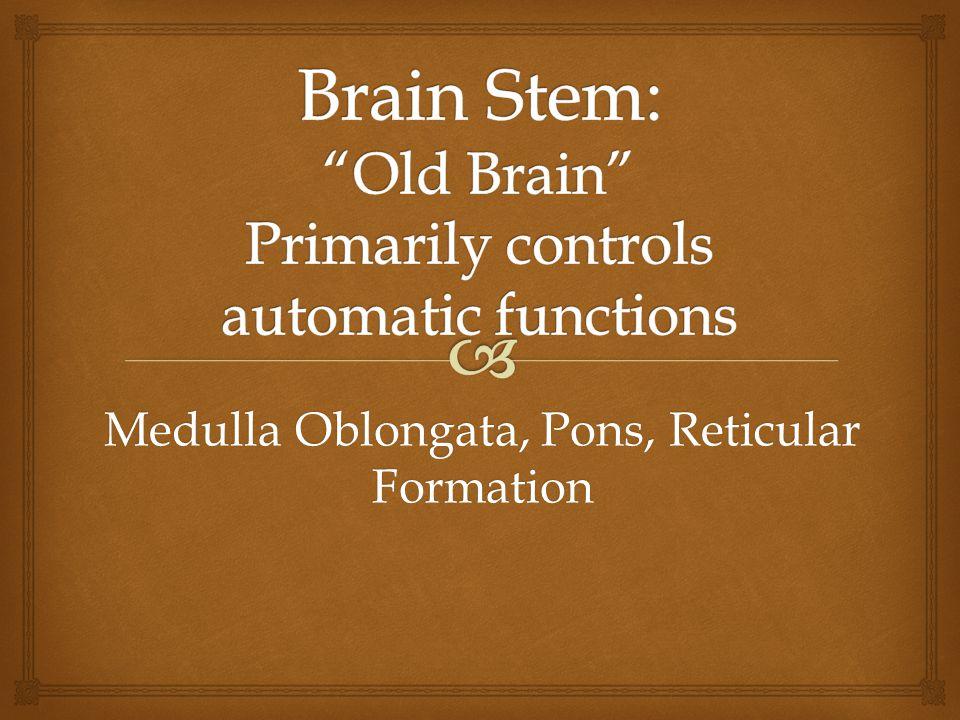 Medulla Oblongata, Pons, Reticular Formation