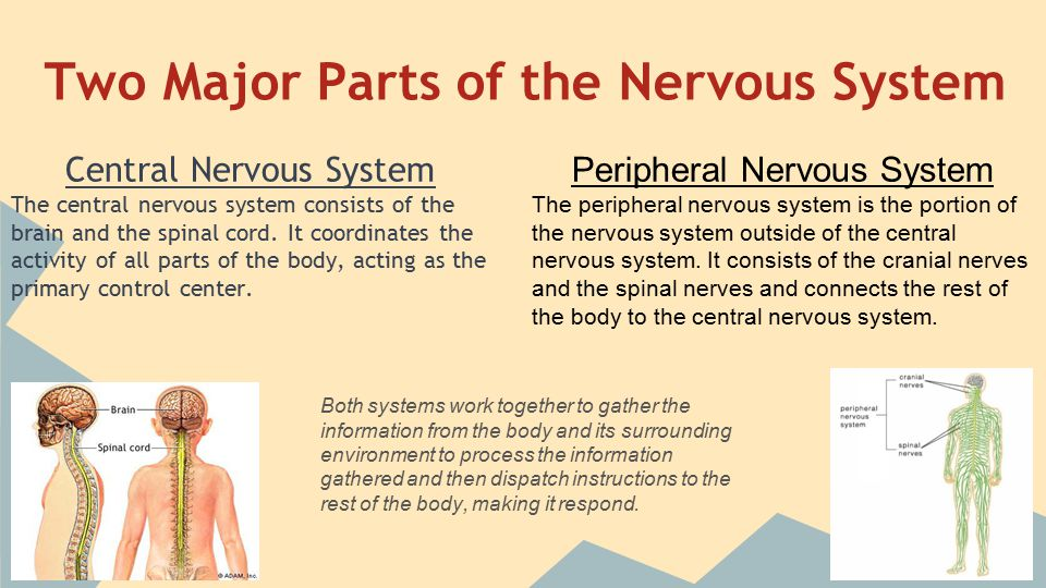 Role of Neurotransmitters Neurotransmitters are released once the message is carried across the axon through vesicles or bunl transport, meaning active transport.
