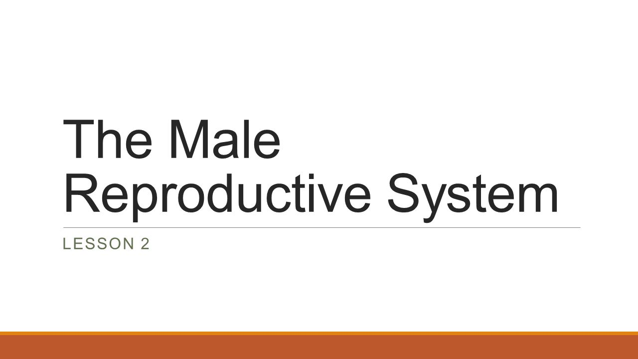 Structure and Function of the Male Reproductive System The reproductive system is the system of organs involved in producing offspring The two main functions of the male reproductive systems are the production and storage of sperm and the transfer of sperm to the female's body during sexual intercourse.