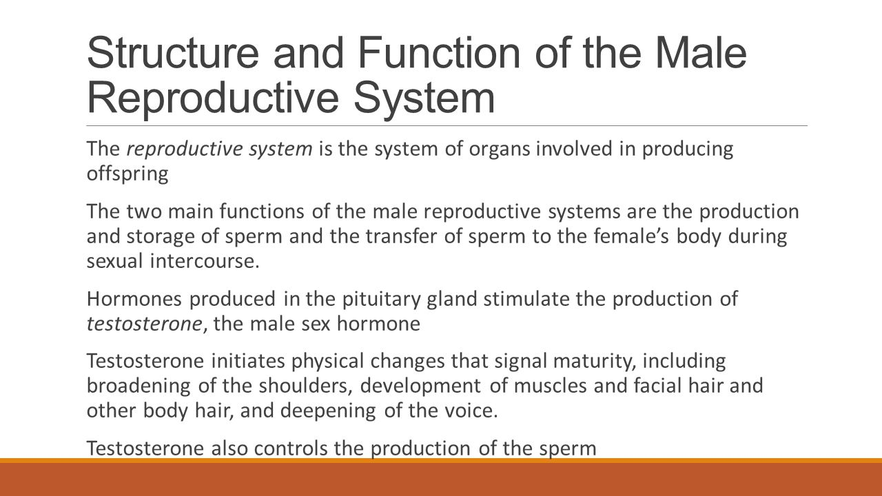 Structure and Function of the Male Reproductive System The reproductive system is the system of organs involved in producing offspring The two main fu