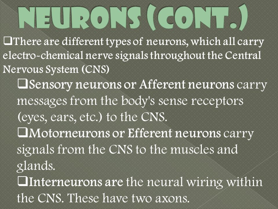  There are different types of neurons, which all carry electro-chemical nerve signals throughout the Central Nervous System (CNS)  Sensory neurons or Afferent neurons carry messages from the body s sense receptors (eyes, ears, etc.) to the CNS.