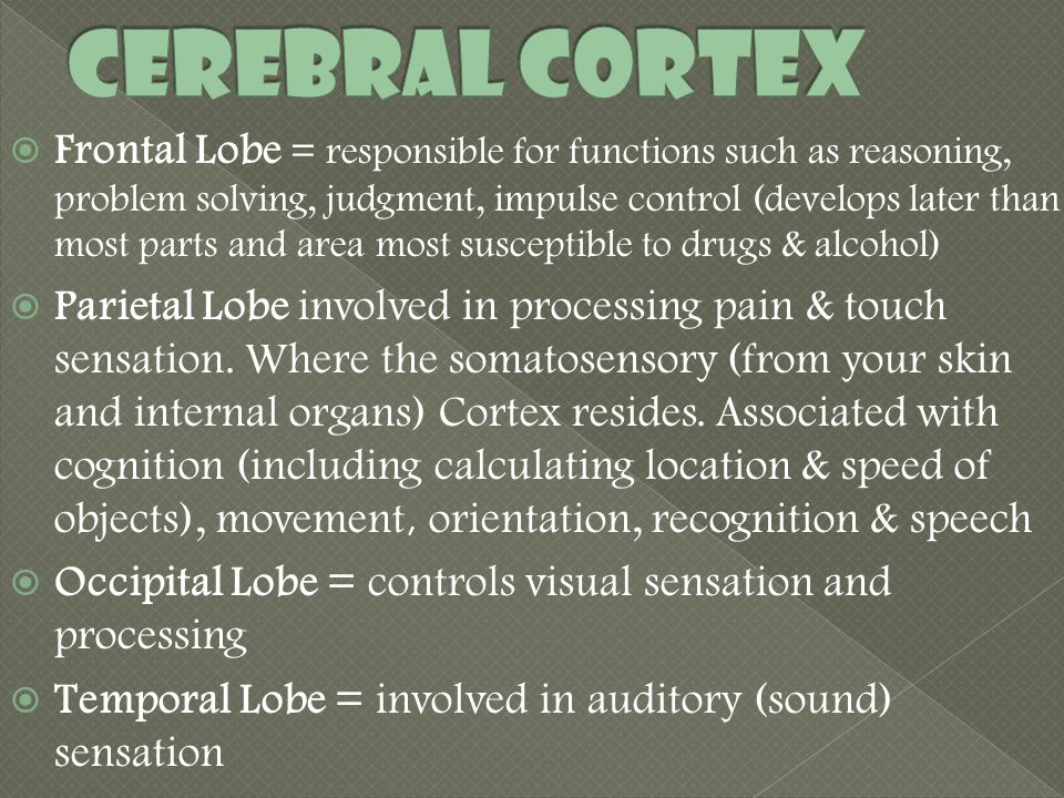  Frontal Lobe = responsible for functions such as reasoning, problem solving, judgment, impulse control (develops later than most parts and area most susceptible to drugs & alcohol)  Parietal Lobe involved in processing pain & touch sensation.