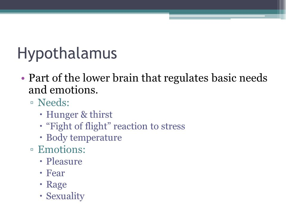 """Hypothalamus Part of the lower brain that regulates basic needs and emotions. ▫Needs:  Hunger & thirst  """"Fight of flight"""" reaction to stress  Body"""