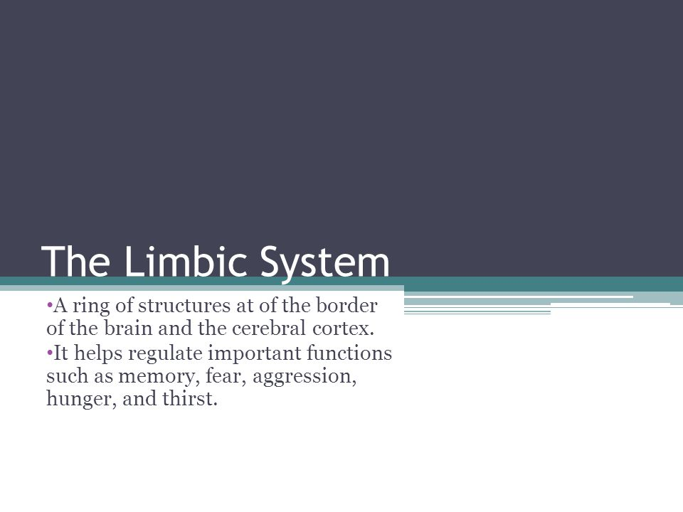 The Limbic System A ring of structures at of the border of the brain and the cerebral cortex. It helps regulate important functions such as memory, fe