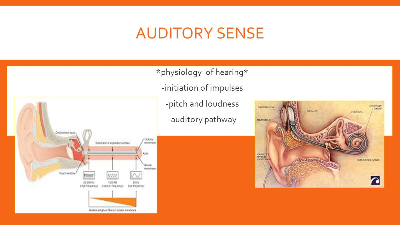 AUDITORY SENSE  *physiology of hearing*  -initiation of impulses  -pitch and loudness  -auditory pathway