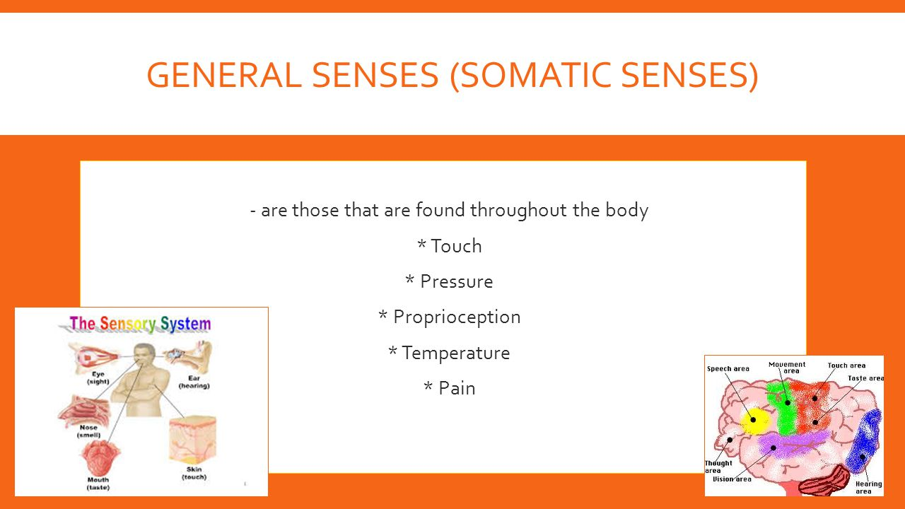 GENERAL SENSES (SOMATIC SENSES)  - are those that are found throughout the body  * Touch  * Pressure  * Proprioception  * Temperature  * Pain