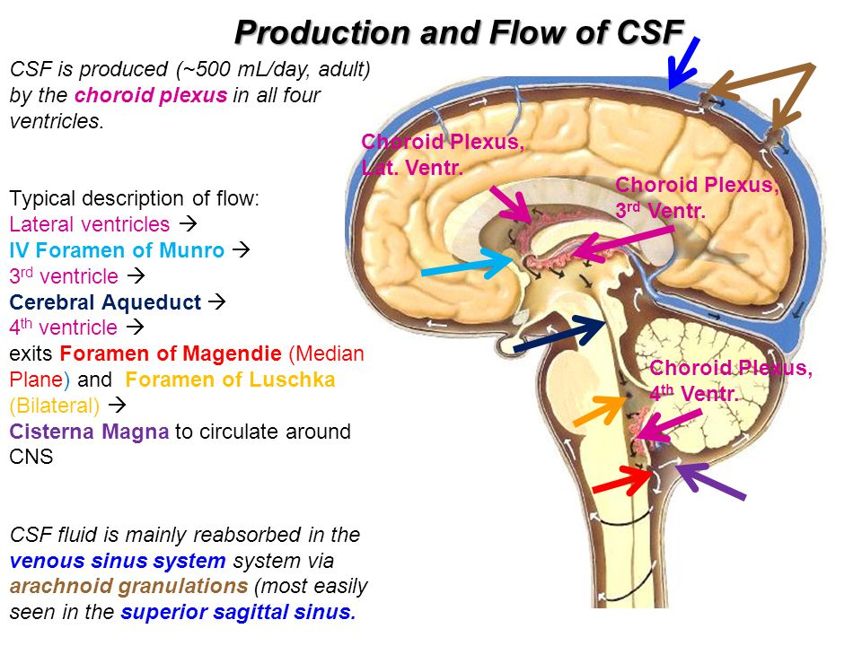 Production and Flow of CSF Choroid Plexus, Lat. Ventr. Choroid Plexus; 3 rd Ventr. Choroid Plexus, 4 th Ventr. CSF is produced (~500 mL/day, adult) by