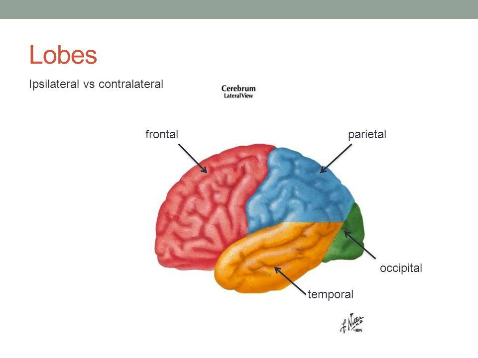 Lobes temporal parietal occipital frontal Ipsilateral vs contralateral
