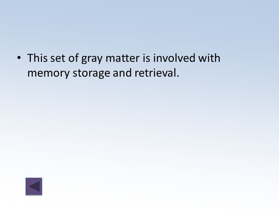 This set of gray matter is involved with memory storage and retrieval.