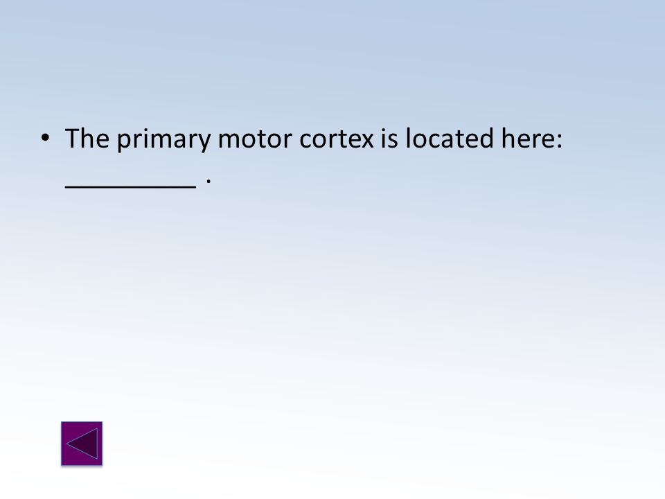 The primary motor cortex is located here: _________.