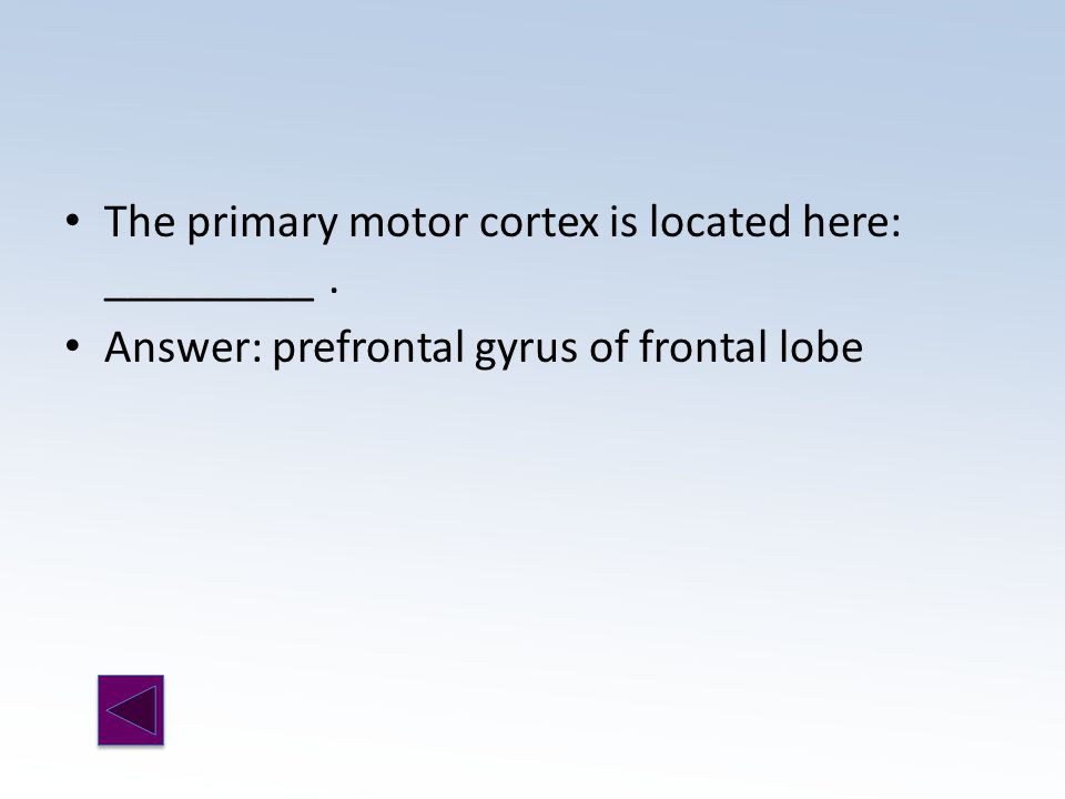 Answer: prefrontal gyrus of frontal lobe