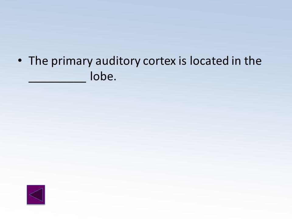 The primary auditory cortex is located in the _________ lobe.