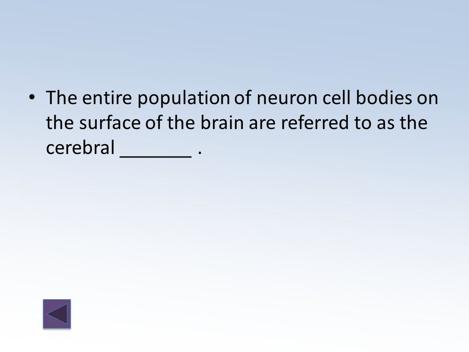 The entire population of neuron cell bodies on the surface of the brain are referred to as the cerebral _______.
