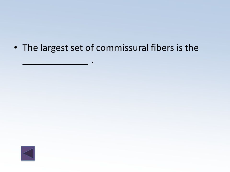 The largest set of commissural fibers is the _____________.