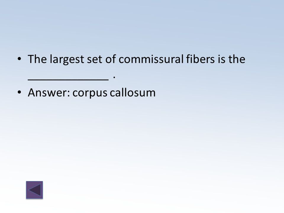 Answer: corpus callosum