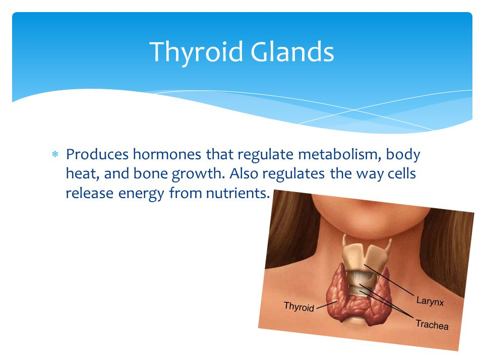  Produces a hormone that regulates the body's balance of calcium and phosphorus. Parathyroid gland