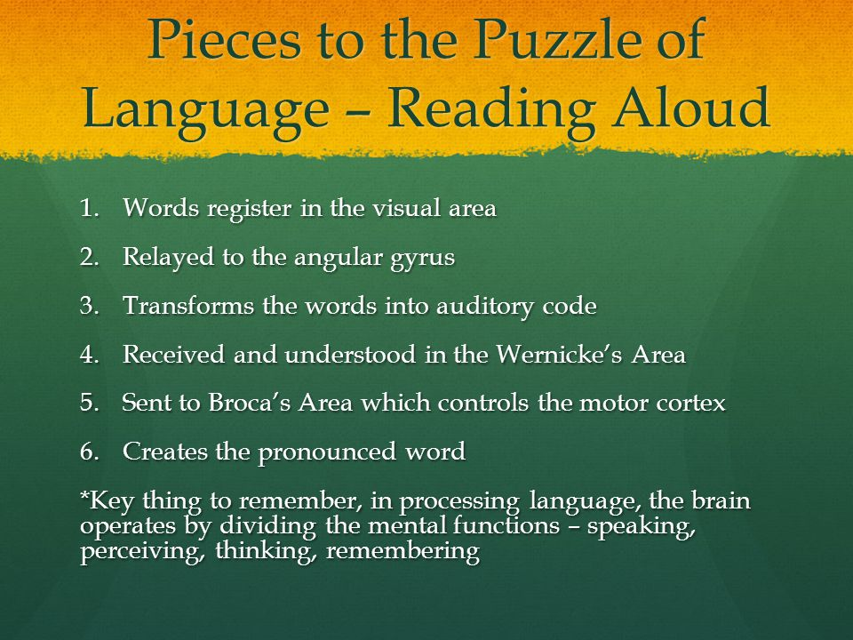 Pieces to the Puzzle of Language – Reading Aloud 1.Words register in the visual area 2.Relayed to the angular gyrus 3.Transforms the words into auditory code 4.Received and understood in the Wernicke's Area 5.Sent to Broca's Area which controls the motor cortex 6.Creates the pronounced word *Key thing to remember, in processing language, the brain operates by dividing the mental functions – speaking, perceiving, thinking, remembering