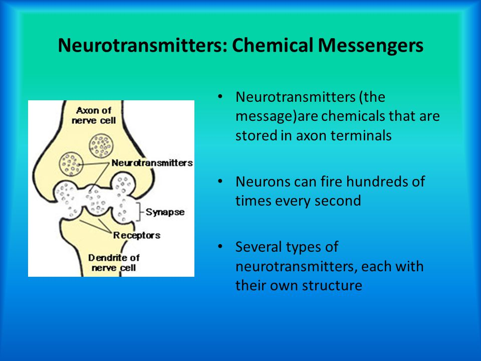 Neurotransmitters: Chemical Messengers Neurotransmitters (the message)are chemicals that are stored in axon terminals Neurons can fire hundreds of tim