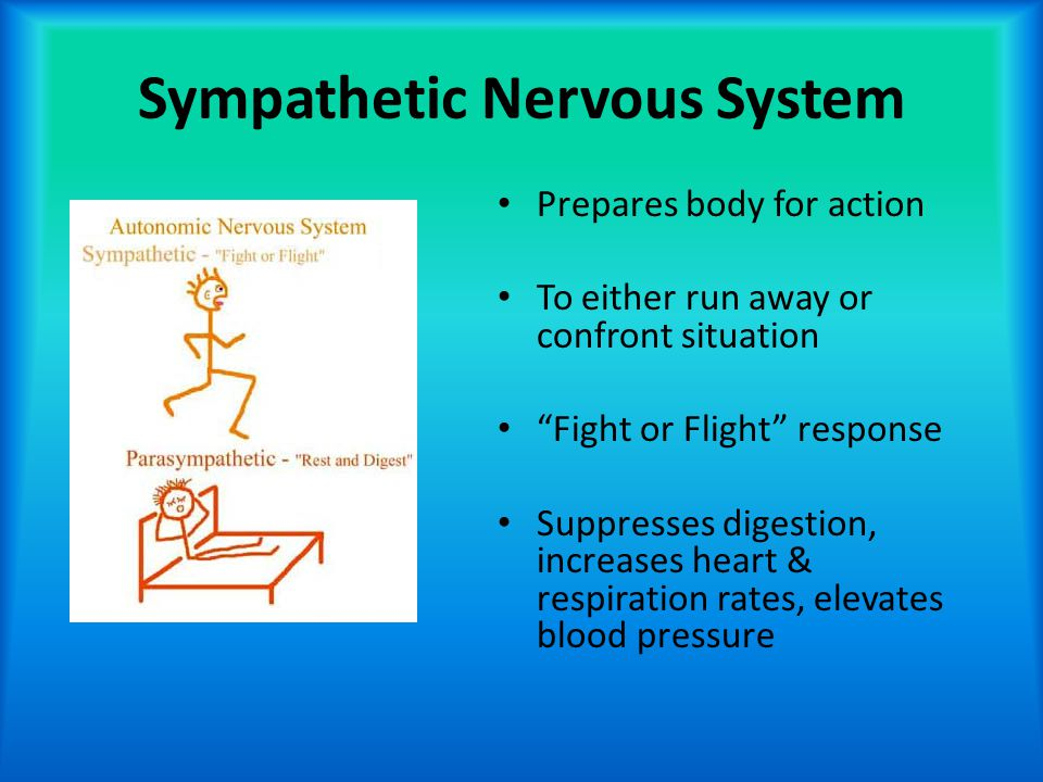 "Sympathetic Nervous System Prepares body for action To either run away or confront situation ""Fight or Flight"" response Suppresses digestion, increase"