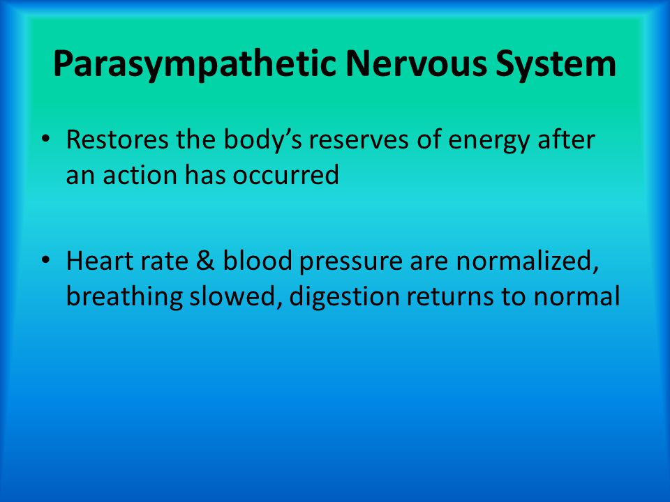 Parasympathetic Nervous System Restores the body's reserves of energy after an action has occurred Heart rate & blood pressure are normalized, breathi
