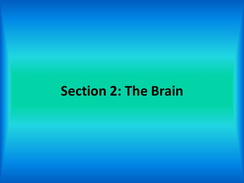 Section 2: The Brain