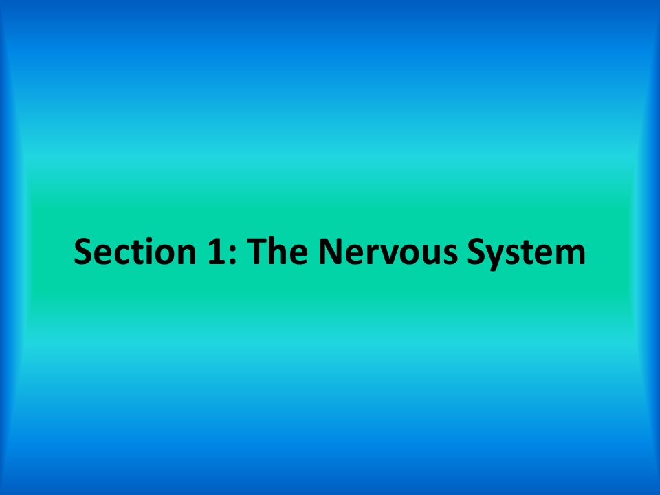 Section 1: The Nervous System