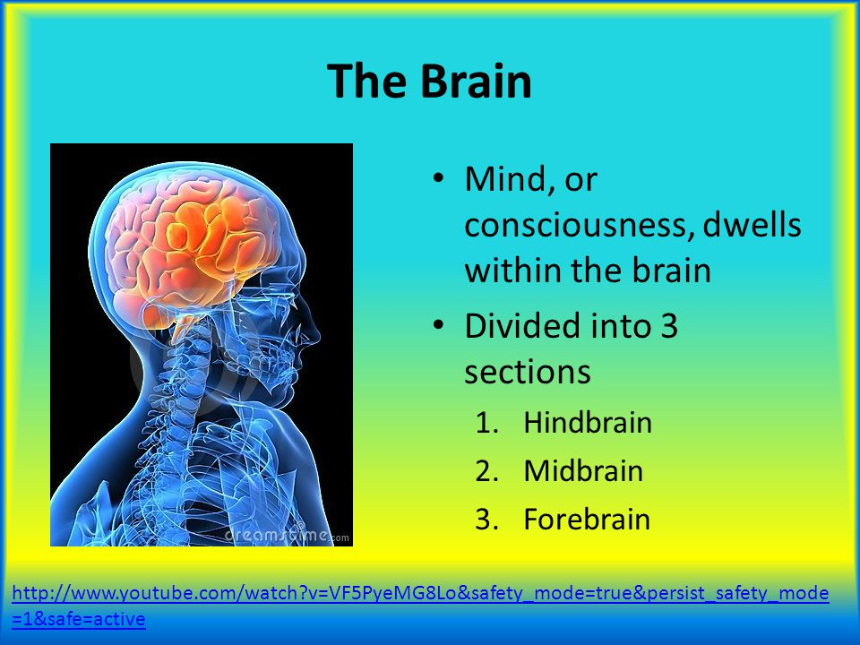 The Brain Mind, or consciousness, dwells within the brain Divided into 3 sections 1.Hindbrain 2.Midbrain 3.Forebrain http://www.youtube.com/watch?v=VF
