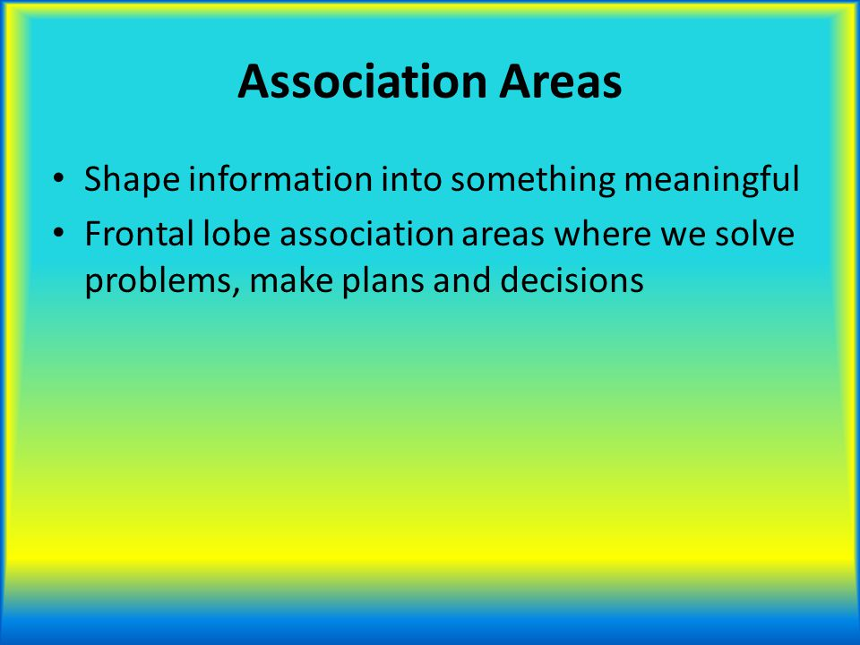 Association Areas Shape information into something meaningful Frontal lobe association areas where we solve problems, make plans and decisions