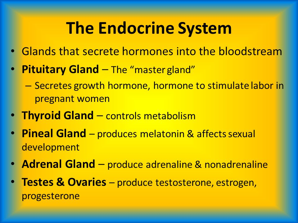 "The Endocrine System Glands that secrete hormones into the bloodstream Pituitary Gland – The ""master gland"" – Secretes growth hormone, hormone to stim"