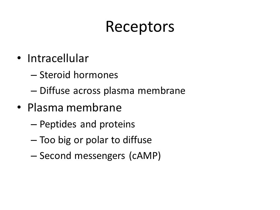 Receptors Intracellular – Steroid hormones – Diffuse across plasma membrane Plasma membrane – Peptides and proteins – Too big or polar to diffuse – Second messengers (cAMP)