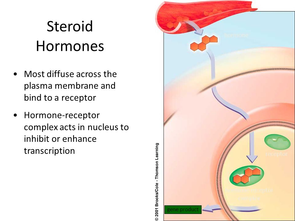Steroid Hormones receptor hormone-receptor complex gene product hormone Most diffuse across the plasma membrane and bind to a receptor Hormone-receptor complex acts in nucleus to inhibit or enhance transcription