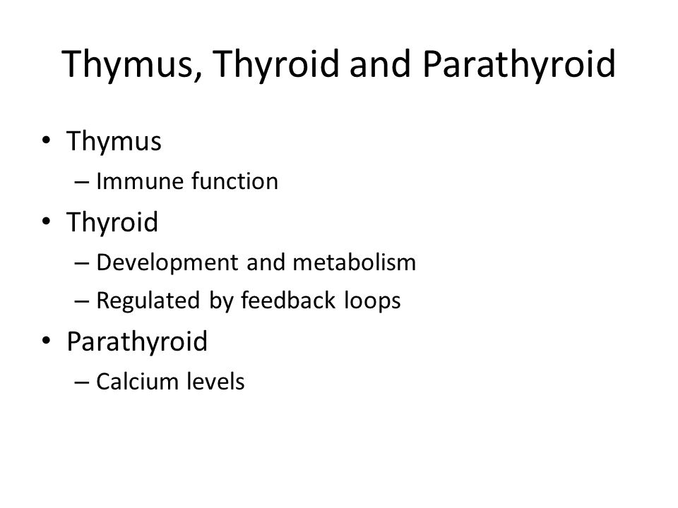 Thymus, Thyroid and Parathyroid Thymus – Immune function Thyroid – Development and metabolism – Regulated by feedback loops Parathyroid – Calcium levels