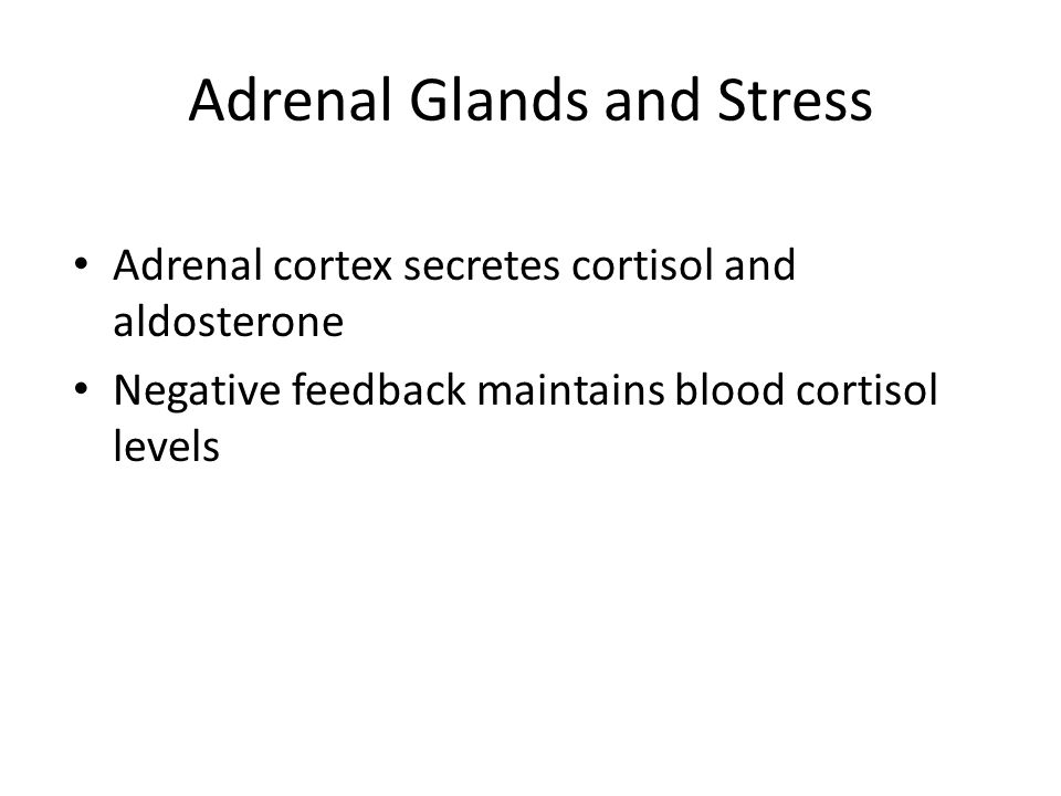 Adrenal Glands and Stress Adrenal cortex secretes cortisol and aldosterone Negative feedback maintains blood cortisol levels