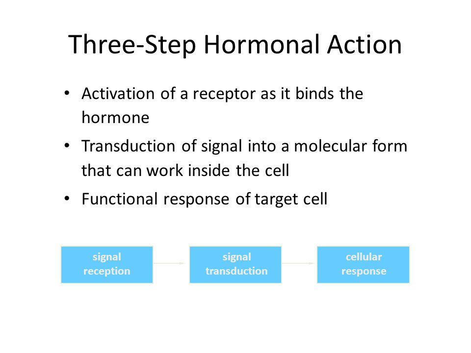Three-Step Hormonal Action Activation of a receptor as it binds the hormone Transduction of signal into a molecular form that can work inside the cell Functional response of target cell signal reception signal transduction cellular response