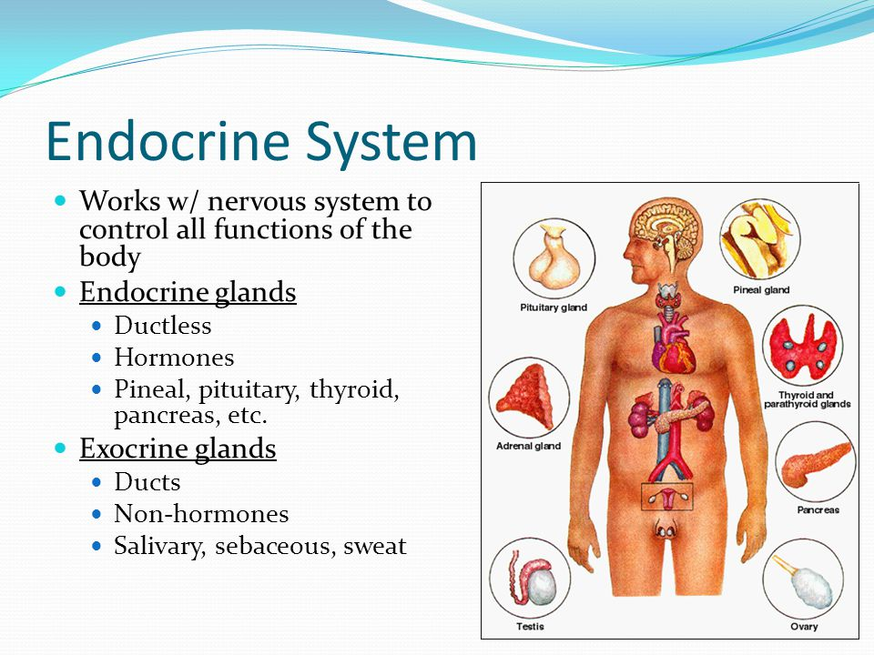 Endocrine System Hormones Chemical signals Carried in bloodstream Affect cells away from gland Homeostatic