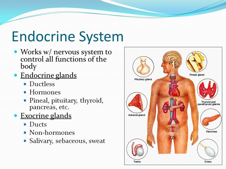 Endocrine Glands Ductless