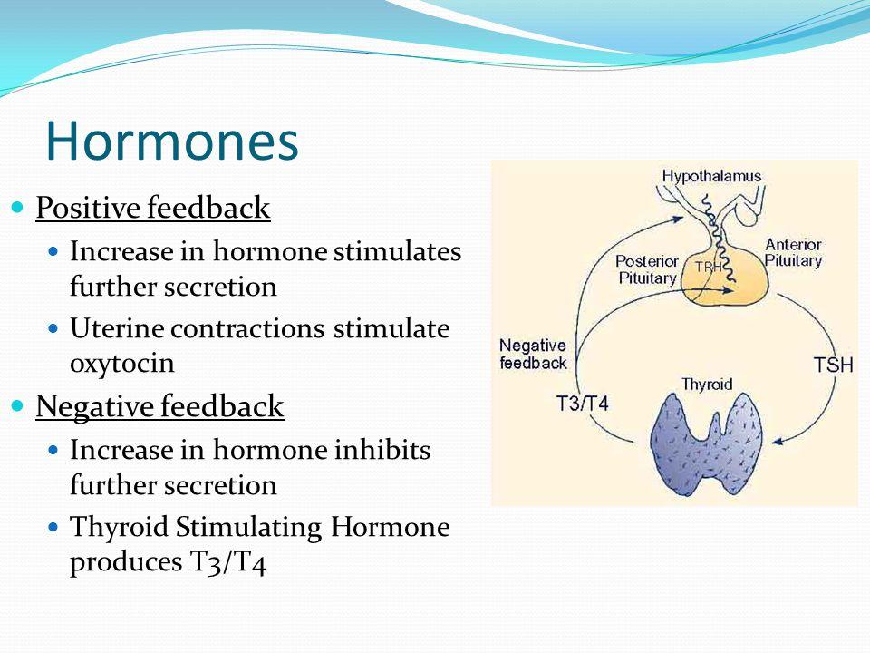 Hormones Positive feedback Increase in hormone stimulates further secretion Uterine contractions stimulate oxytocin Negative feedback Increase in horm