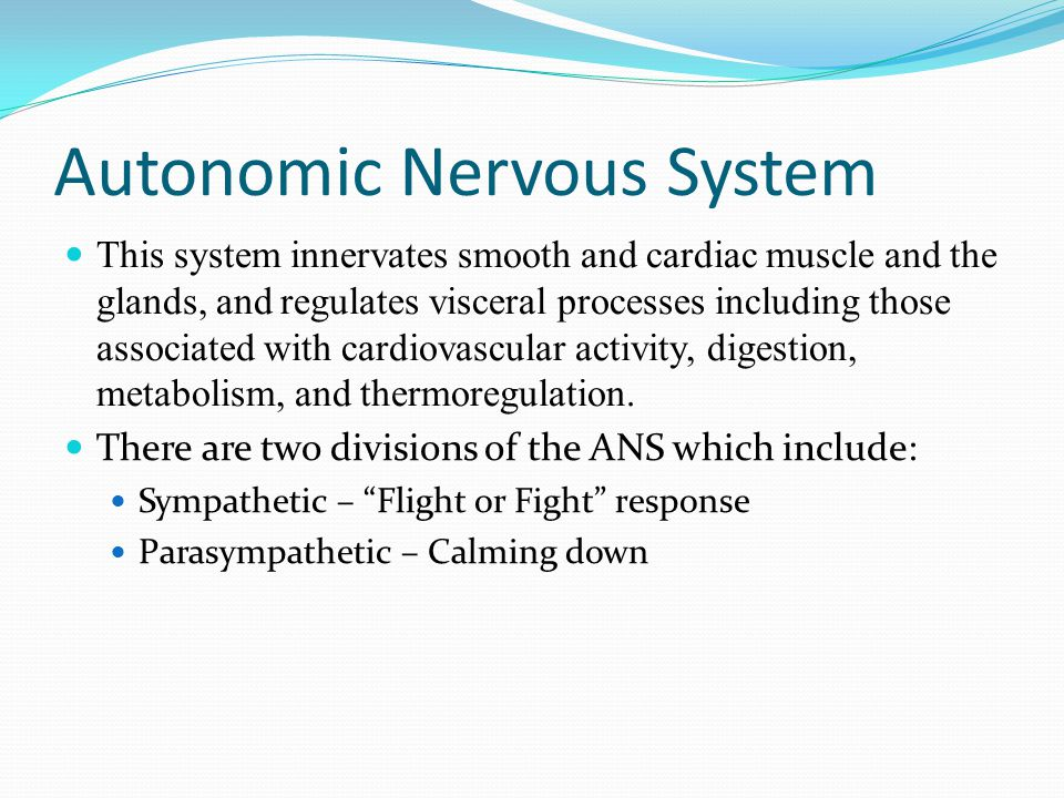 Autonomic Nervous System This system innervates smooth and cardiac muscle and the glands, and regulates visceral processes including those associated with cardiovascular activity, digestion, metabolism, and thermoregulation.