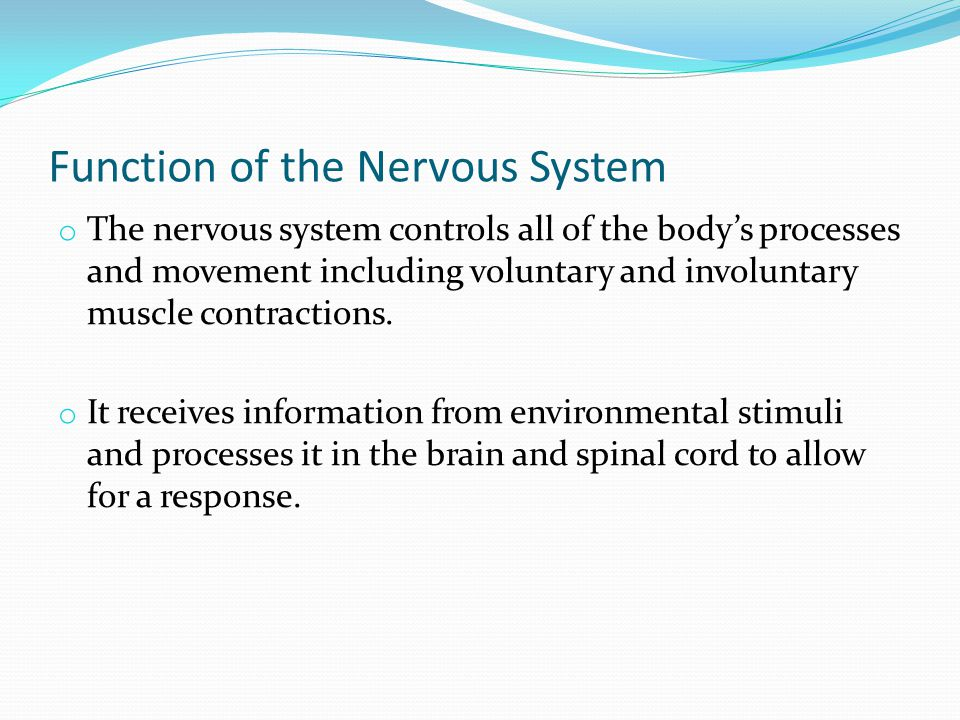 Function of the Nervous System o The nervous system controls all of the body's processes and movement including voluntary and involuntary muscle contractions.