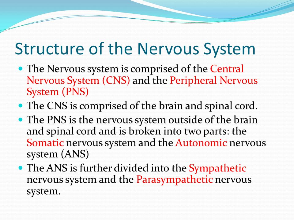Structure of the Nervous System The Nervous system is comprised of the Central Nervous System (CNS) and the Peripheral Nervous System (PNS) The CNS is comprised of the brain and spinal cord.