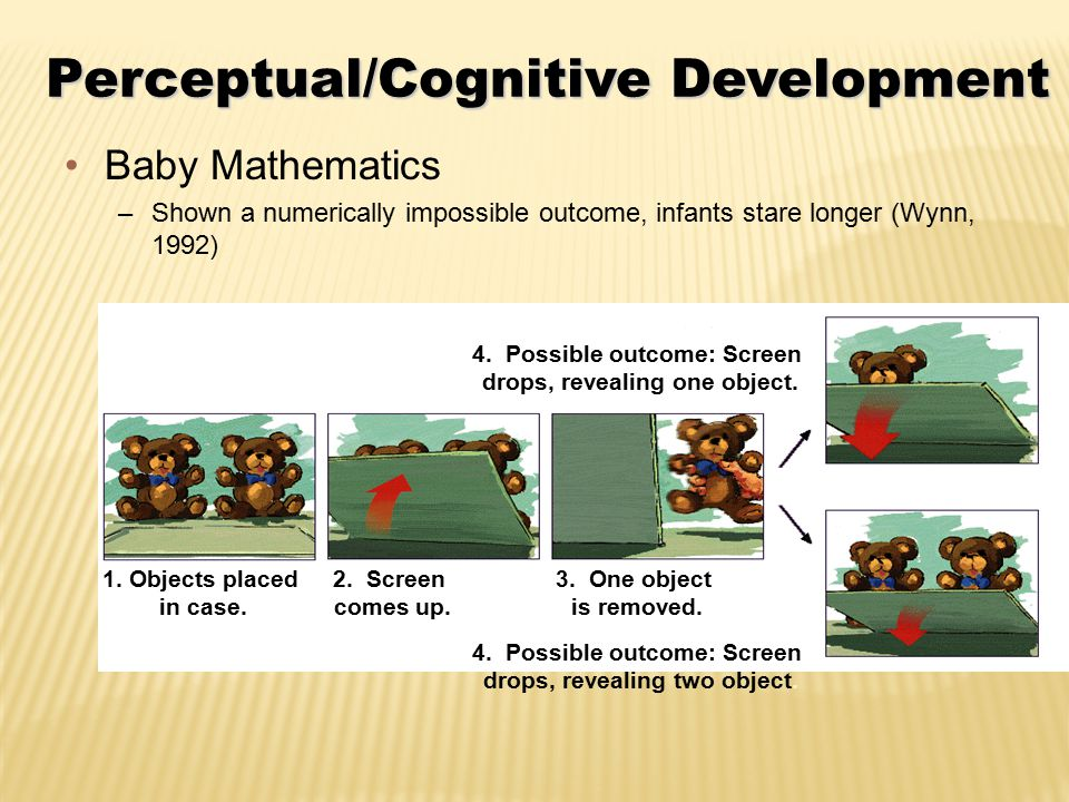Perceptual/Cognitive Development Baby Mathematics –Shown a numerically impossible outcome, infants stare longer (Wynn, 1992) 1.