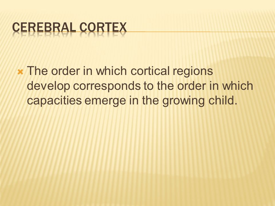  The order in which cortical regions develop corresponds to the order in which capacities emerge in the growing child.